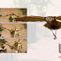 Ringen aanvliegen door De Valk Roofvogels – Foto 6